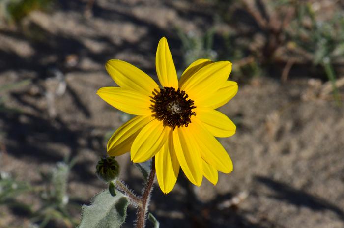 Name Southwest Desert Flora